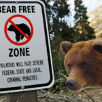 "The bear's all like ""seriously?"""