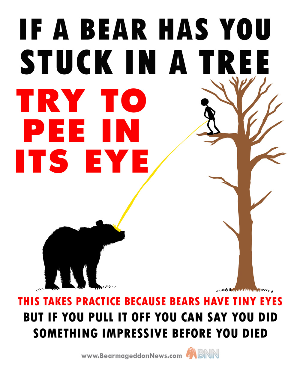 Bear-up-tree-PEE