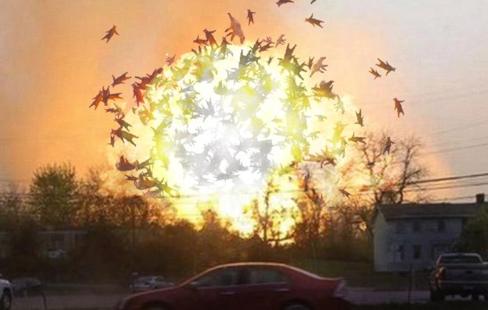 bearsplosion