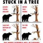 Bear-up-tree-CARTOON